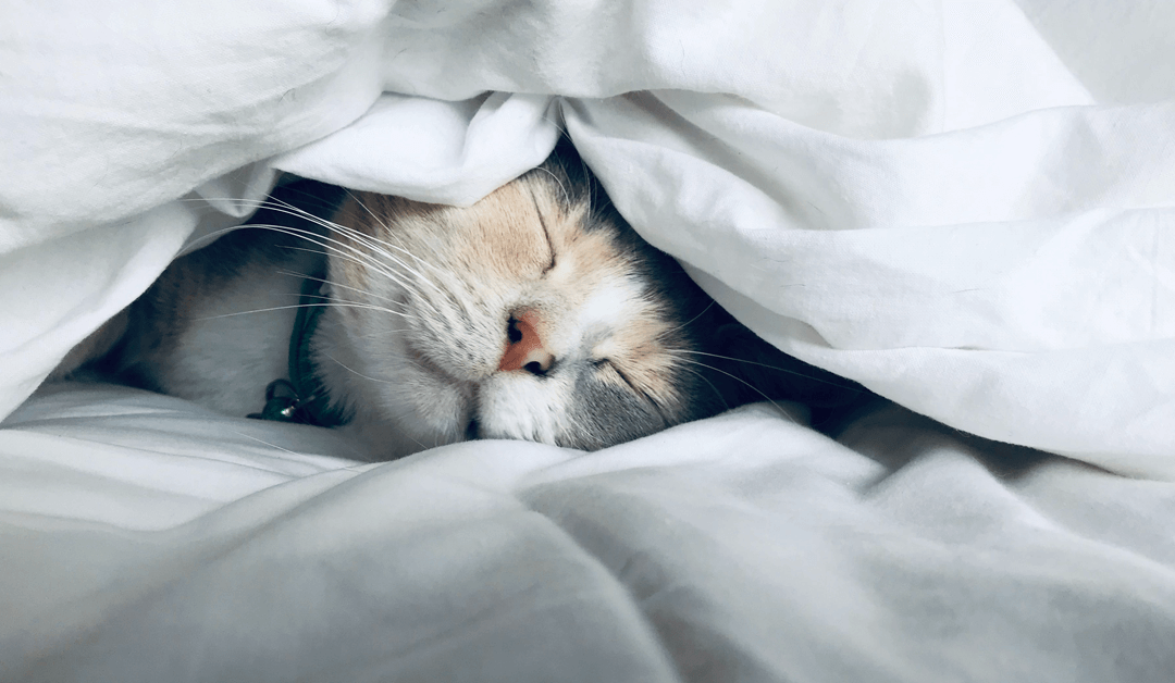 Sleep and our Mental Well-Being