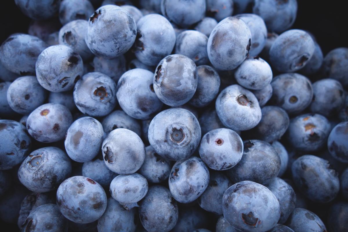 Blueberries. Photo by Jeremy Ricketts on Unsplash