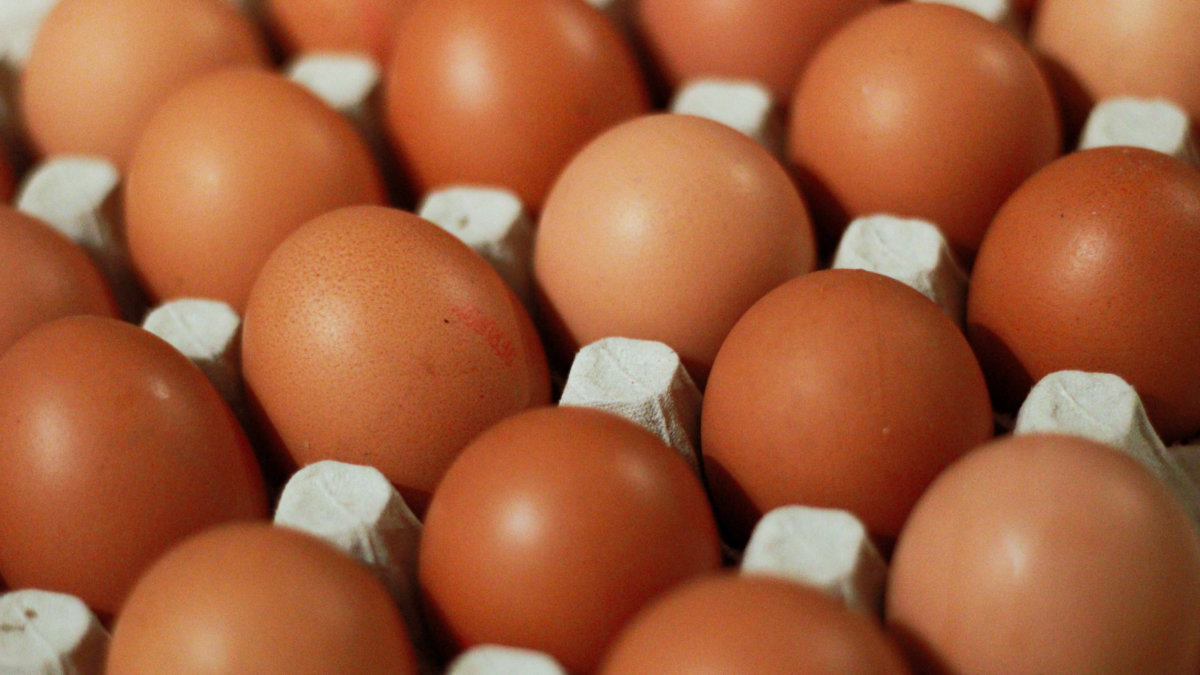 We bought 54 eggs today! Photo by DDP on Unsplash