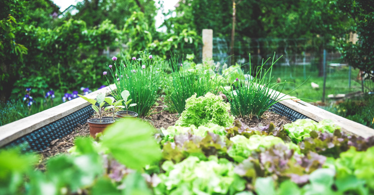 A raised garden bed growing herbs and leafy greens. Photo by Markus Spiske on Unsplash.