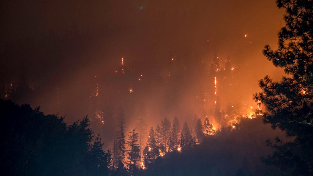 California forest burns. Photo by Matt Howard on Unsplash