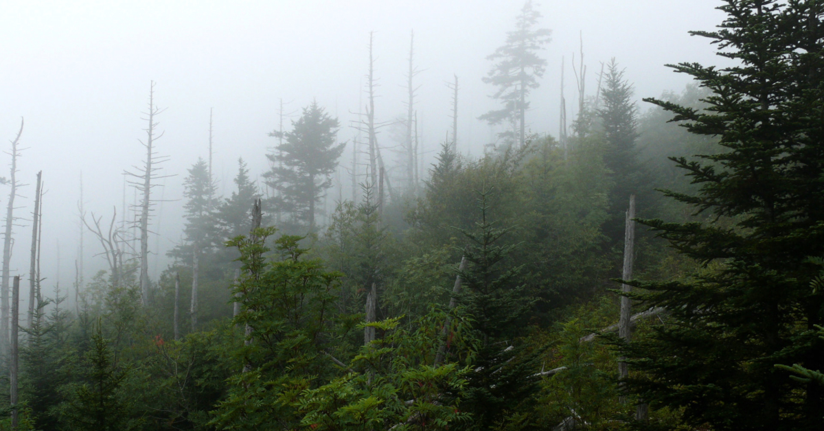 Clingmans Dome in the Smokey Mountains