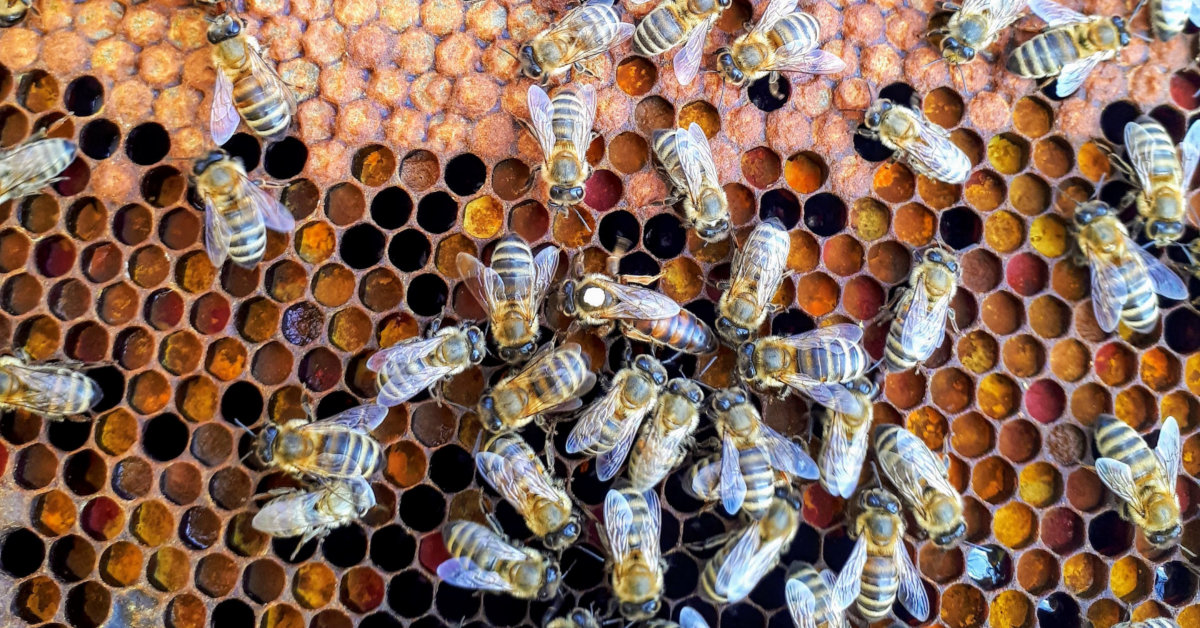 A New, Local Queen and Bees to Strengthen our Hive