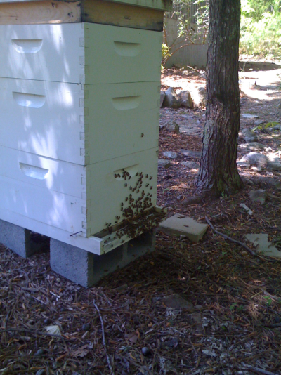 THis image of our old hive is from 2009.