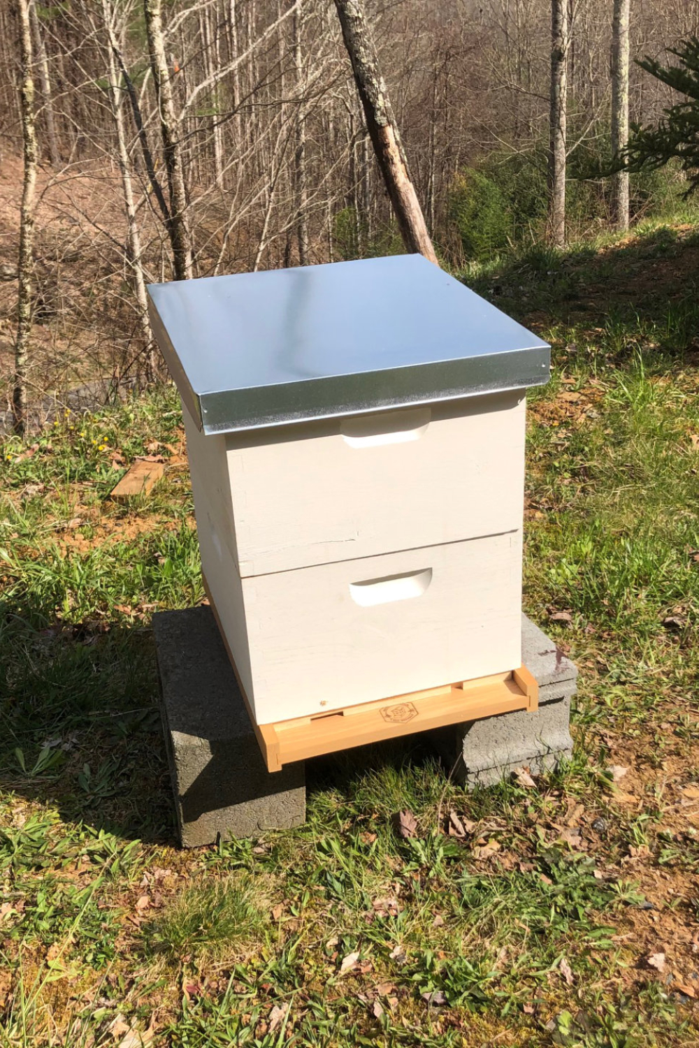 A New Beekeeper\'s Guide to Setting Up Your First Beehive