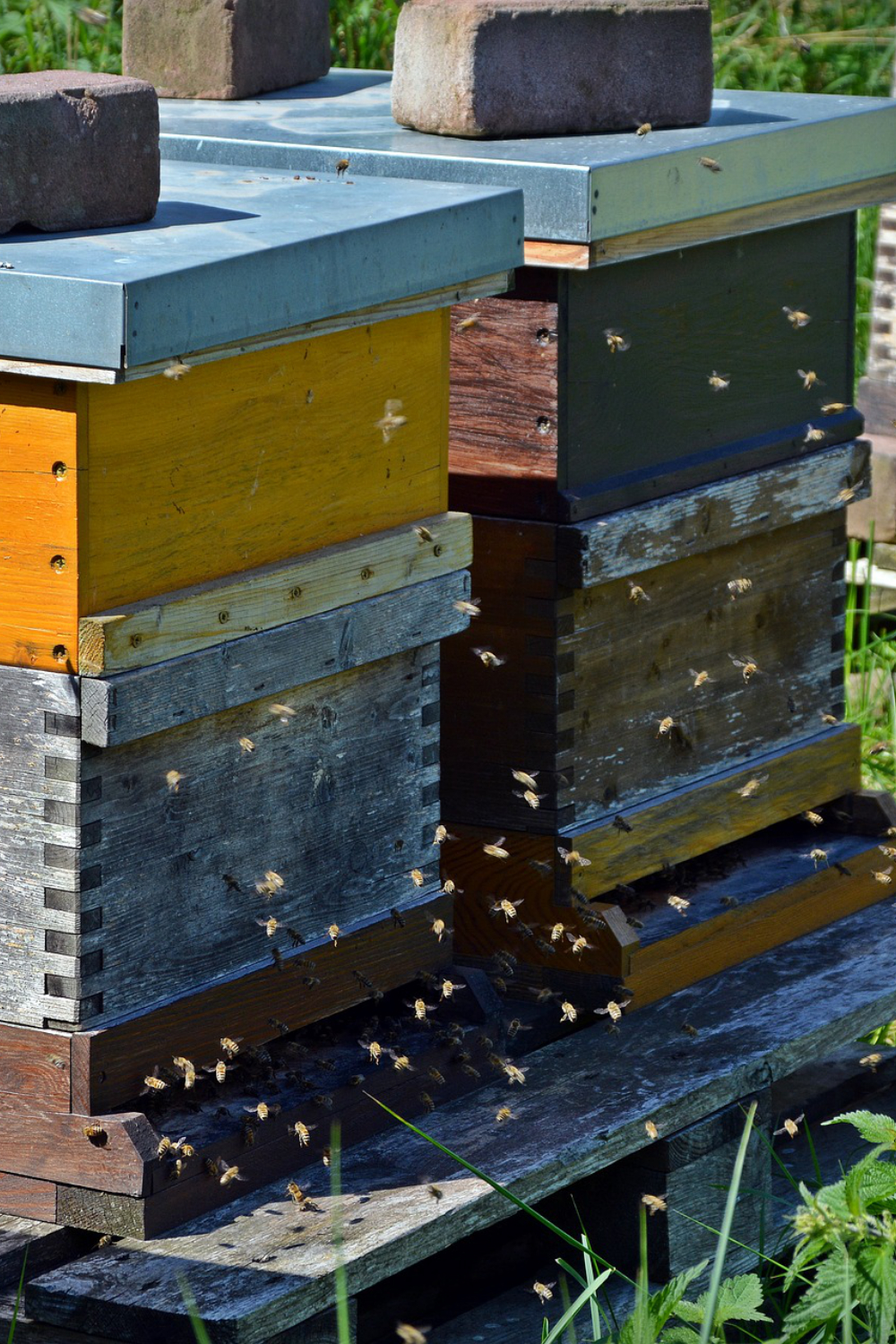 A New Beekeepers Guide to Feeding Your Bees
