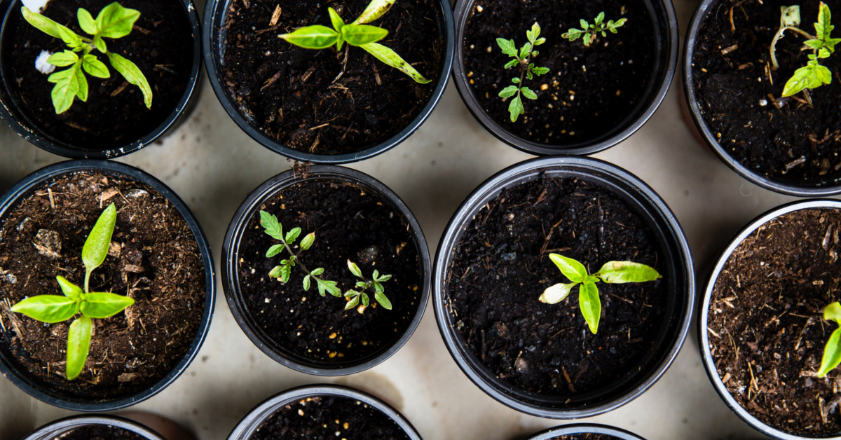 Prepper Diary May 28: When is a Weed not a Weed