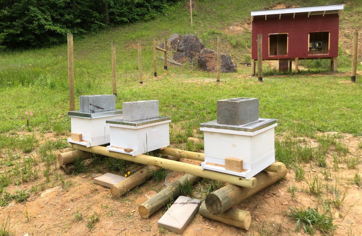 Beehives and chicken coop