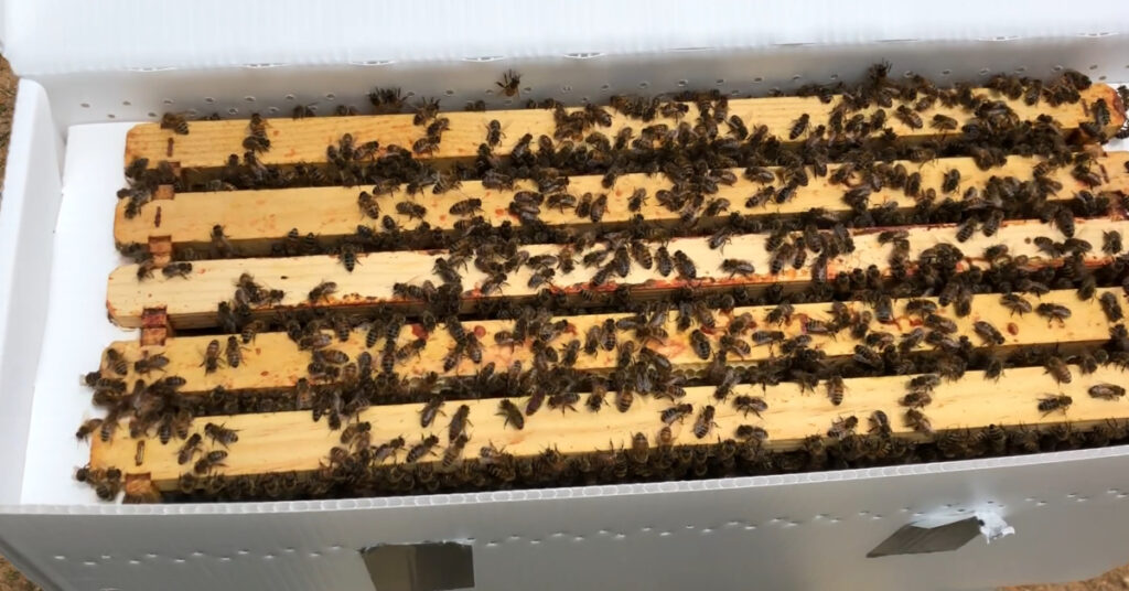A nuc with lots of bees