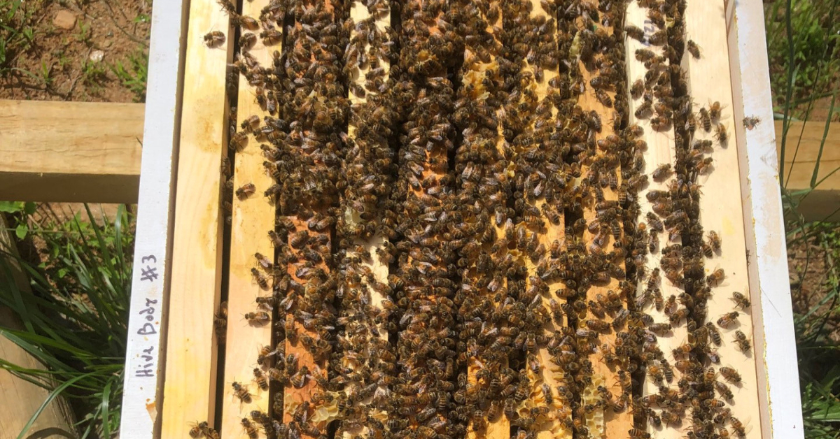 Bees in an open beehive