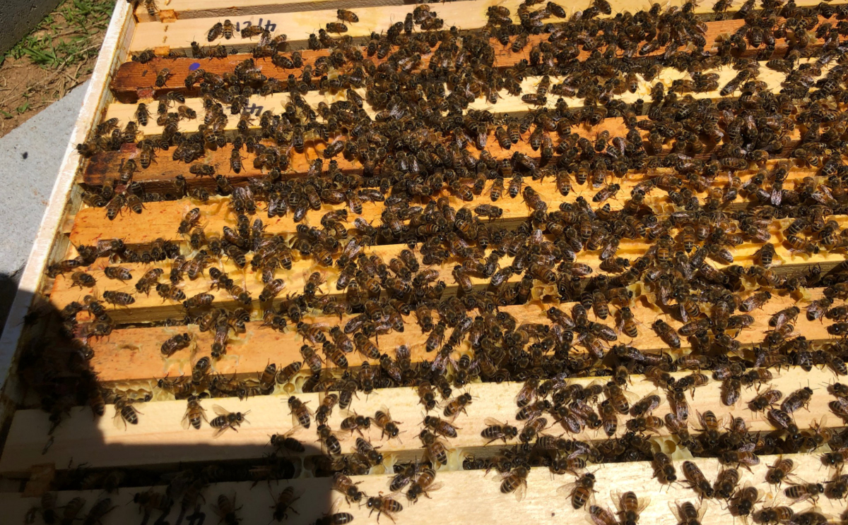 A box full of bees.