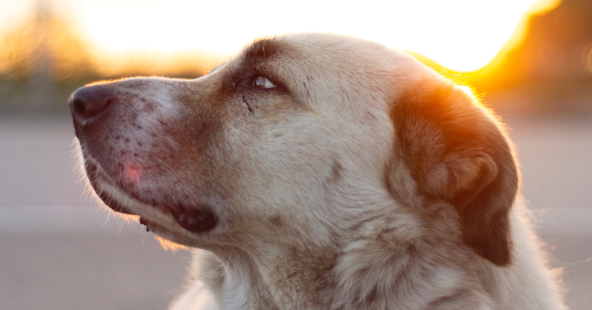 Prepper Diary August 15: We Get a Dog and New Bee Equipment