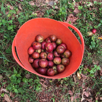 A bucket of apples