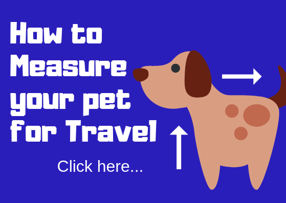 How to measure your dog for travel