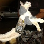 """During interrogation, the cat kept muttering something about """"Meow!""""  Investigators think it may be some sort of code."""
