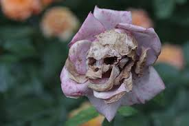 I'll bet you see a skull in this naturally-occuring flower, don't you?  Sign from Edgar Allan Poe?