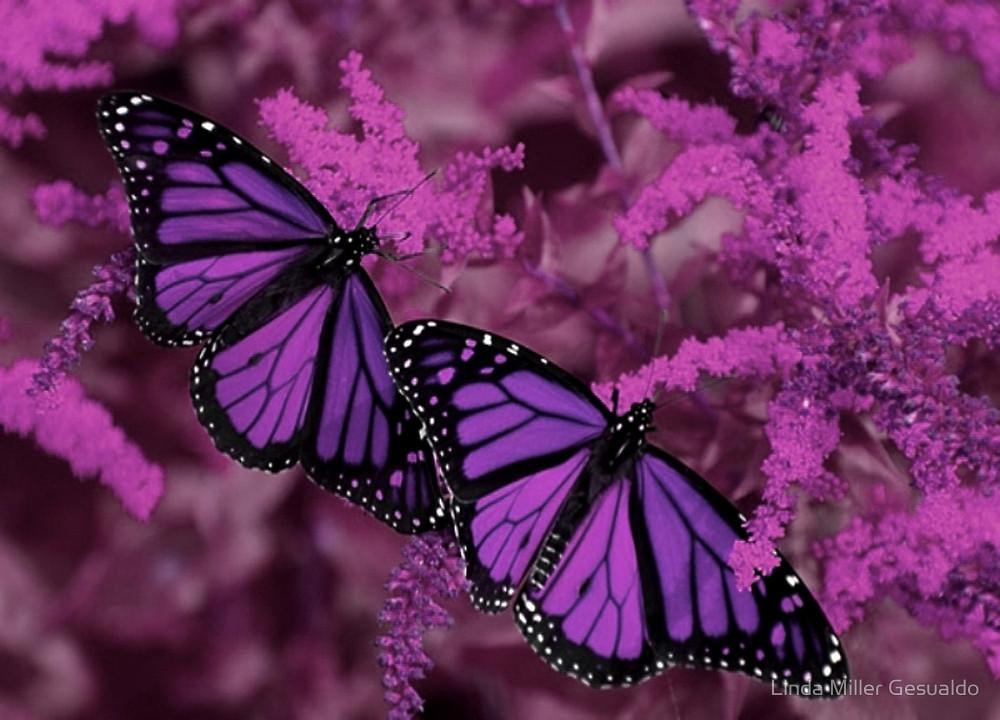 purple butterflies