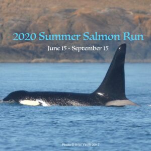 Join the 1st annual Summer Salmon Run!