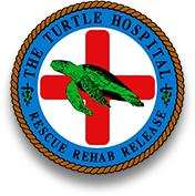 sea turtle hospital logo