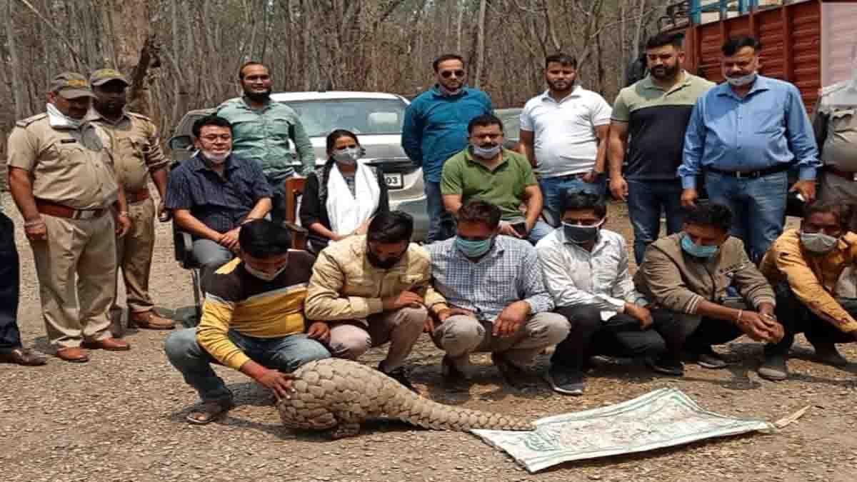 Six men caught with live pangolin