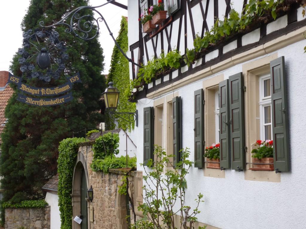Wine tasting in the Pfalz