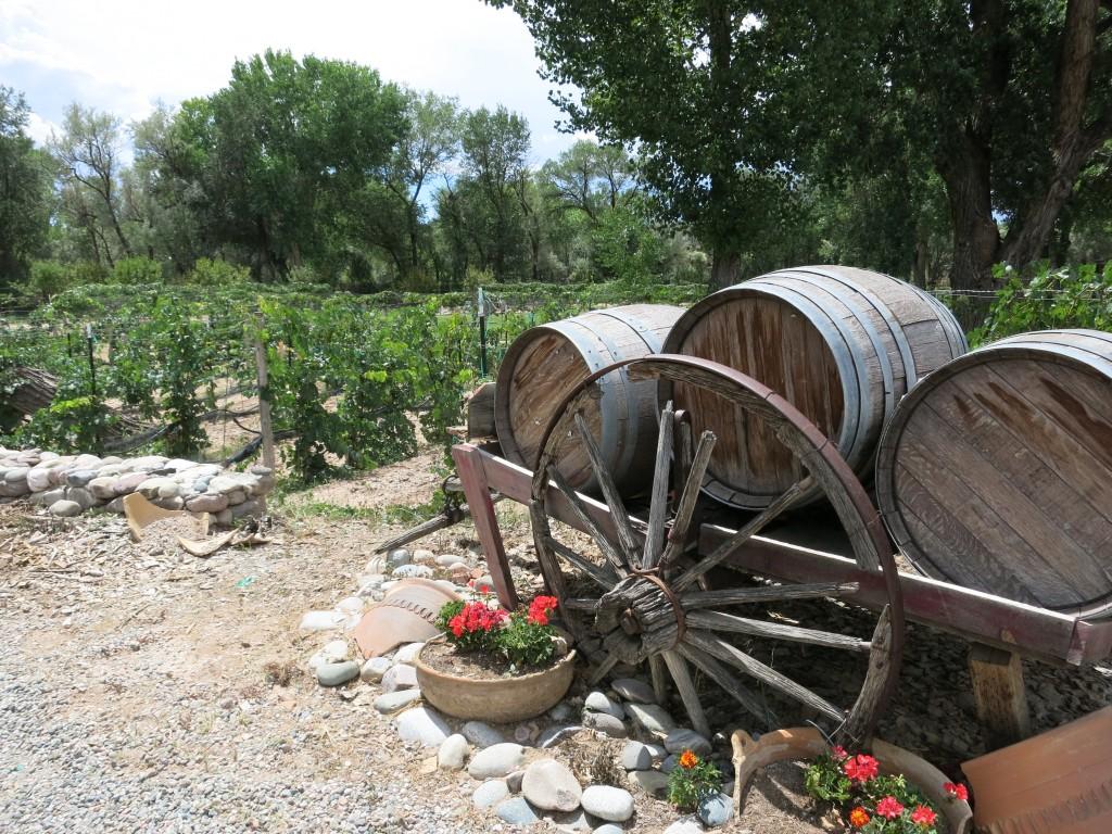 Vineyards at Estrella del Norte