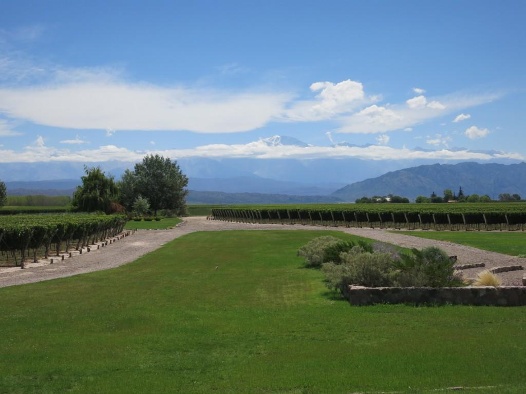 Vineyards of Finca Decero
