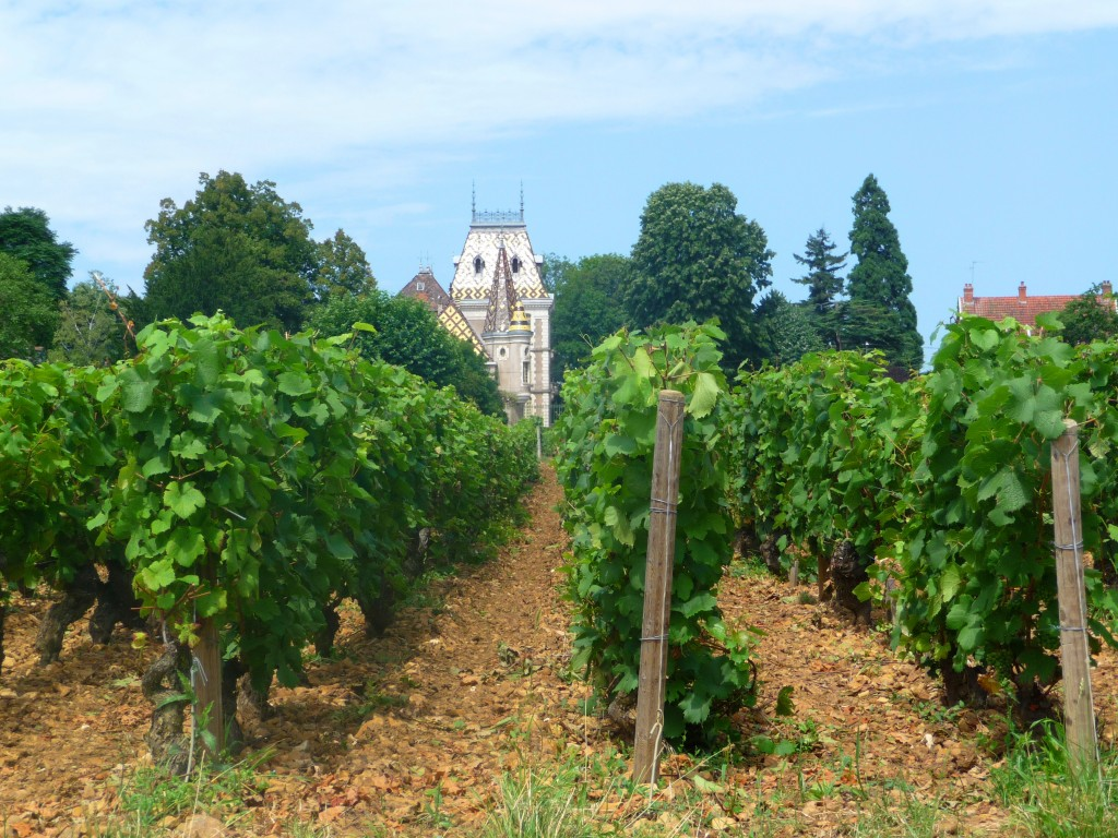 Aloxe-Corton, in the heart of the Cote d'Or