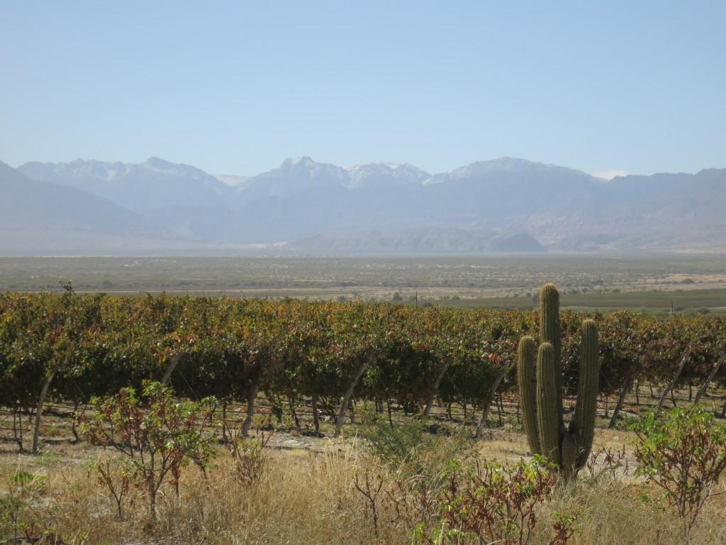 Vineyards in Salta