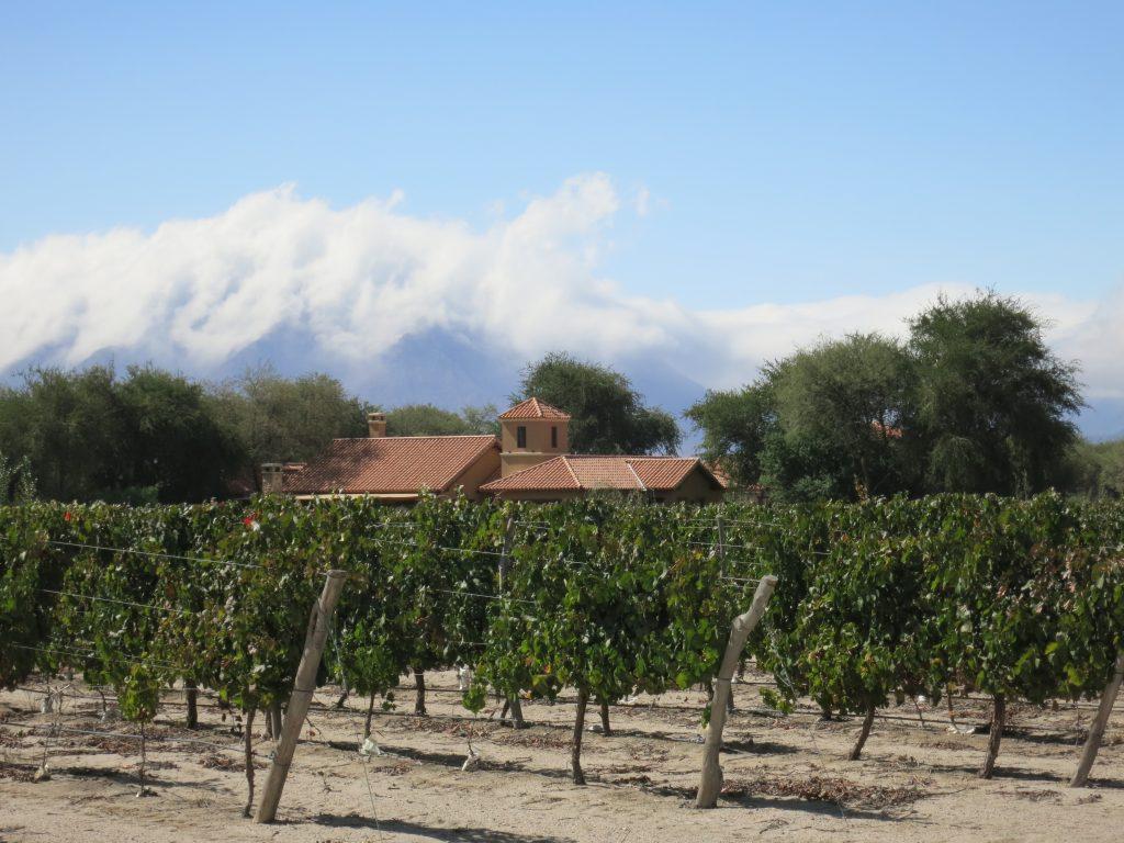 Vineyards at Estancia de Cafayate