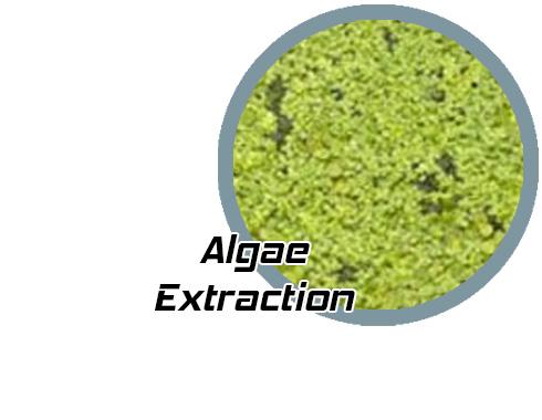 algae_grid