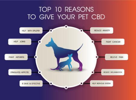 Therapeutic Benefits of CBD Oil for Pets