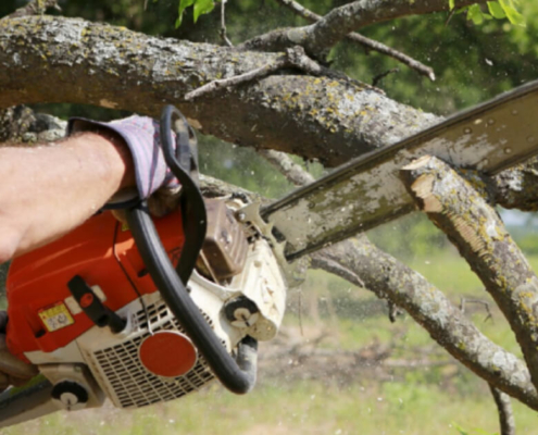 cutting-tree-service-evansville-indiana