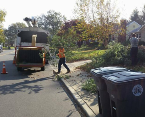 tree-services-removal-clean-in-evansville-in