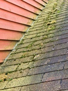 Roof with algae