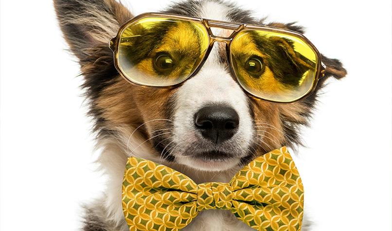 Dog with yellow eye glass