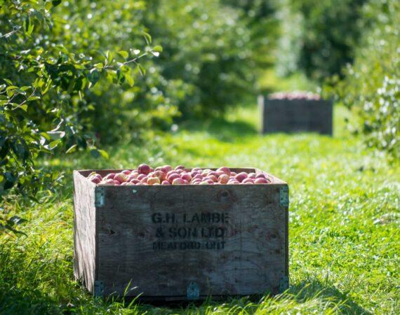 A Taste of the Apple Pie Trail