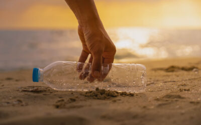 How Do Beach Cleanups Benefit the Community?