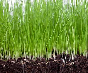 Grass for industry link