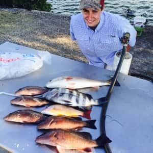Mangrove Snapper Redfish Fishing Lane Snapper and Sheepshead