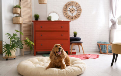 How to Help Your Pet Adjust to a New Apartment