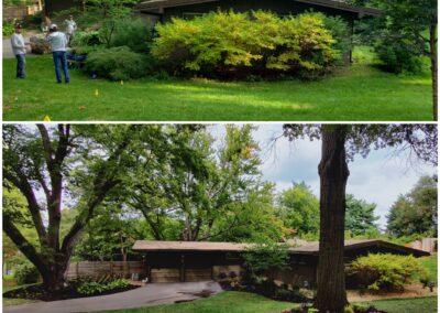 Landscape - Before & After