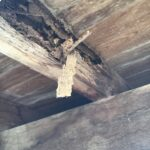 Termite damage to subfloor timbers