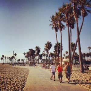 venice palmtrees