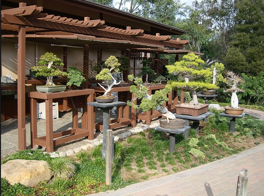 bonsai trees japanese garden