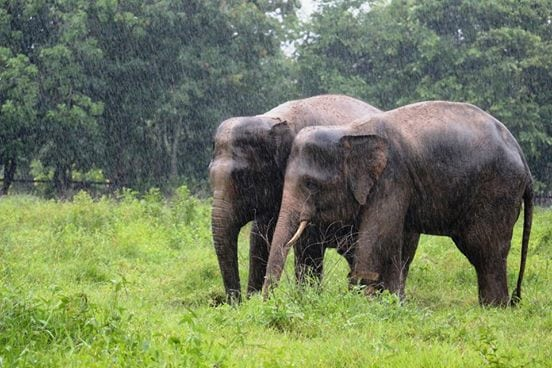 Chhouk and Lucky playing together in the rain!