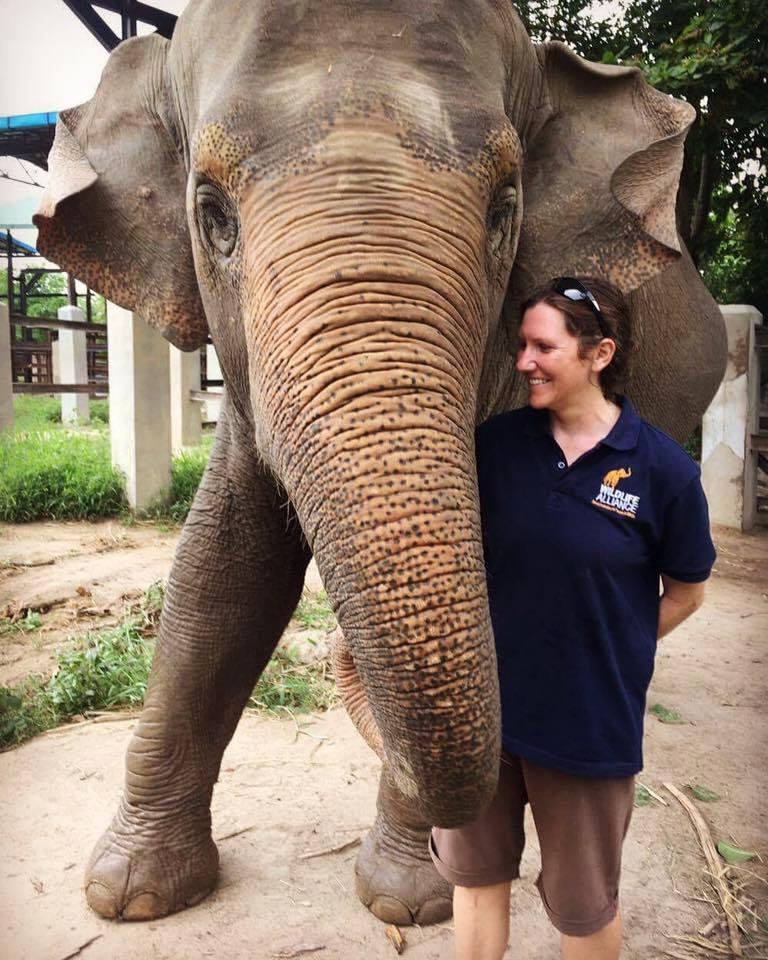 Phnom Tamao Wildlife Rescue Center team Lucky elephant