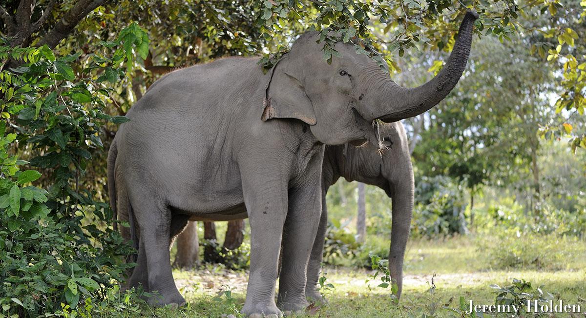 Elephant Trunks crop
