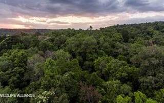 Cardamom Rainforest landscape Cambodia Wildlife Alliance WA_Watermarked resized
