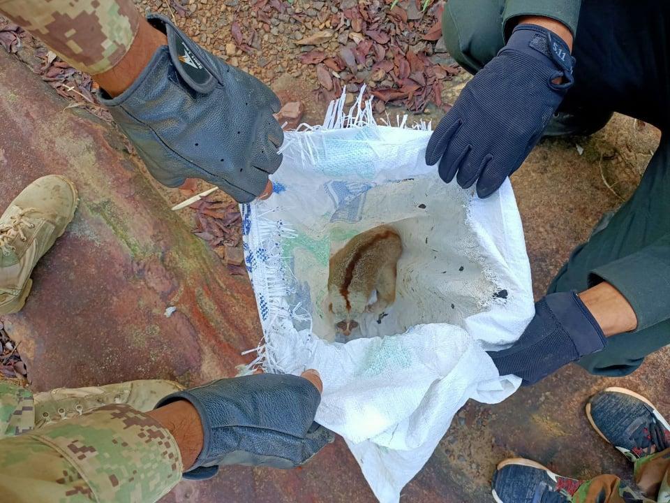 CFPP May 2021 Rangers slow loris inside poachers bag in Cardamom Rainforest Landscape Cambodia Wildlife Alliance